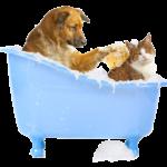 Good Pet Shampoo Bars