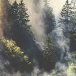 Serenity Soapworks Pine Breeze
