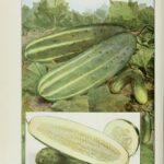 Serenity Soapworks Cucumber