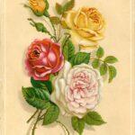 Serenity Soapworks Rose Garden